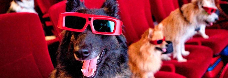 Полицейские собаки в кино – фильмы о четвероногих стражах порядка