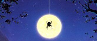 Фильмы ужасов про пауков