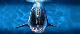 Дучшие фильмы про акул