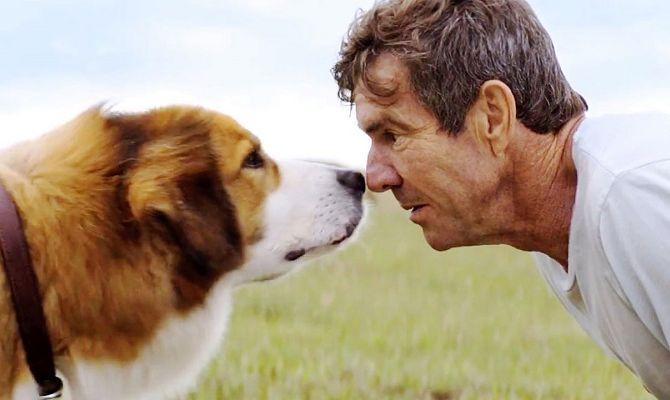 Собачья жизнь 2, семейный фильм