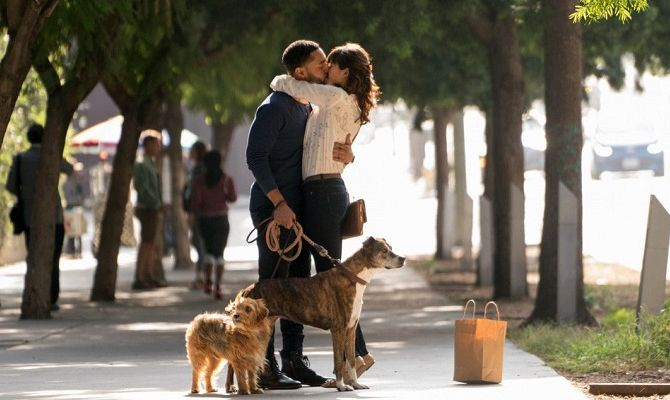 Собачьи дни, фильм