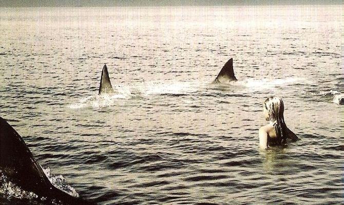Стая акул, фильм