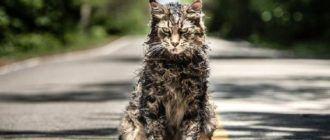 Лучшие фильмы ужасов про животных