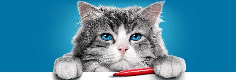 Лучшие фильмы про котов