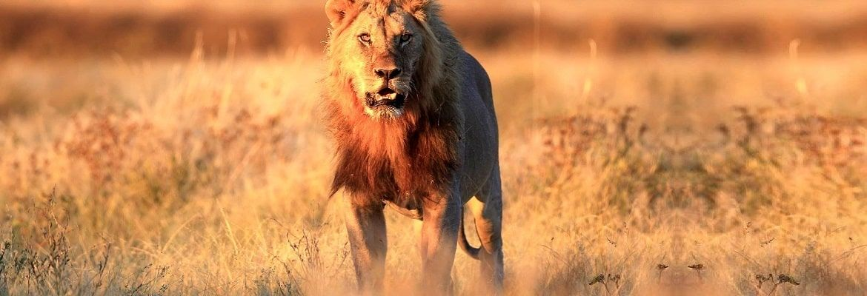 Лучшие фильмы с участием львов