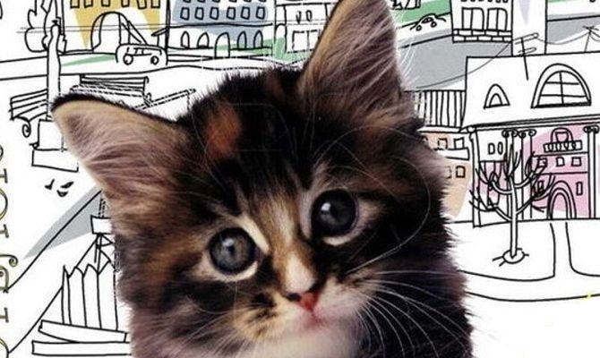 Котенок, фильм