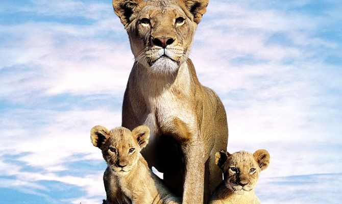Львиная семейка, фильм