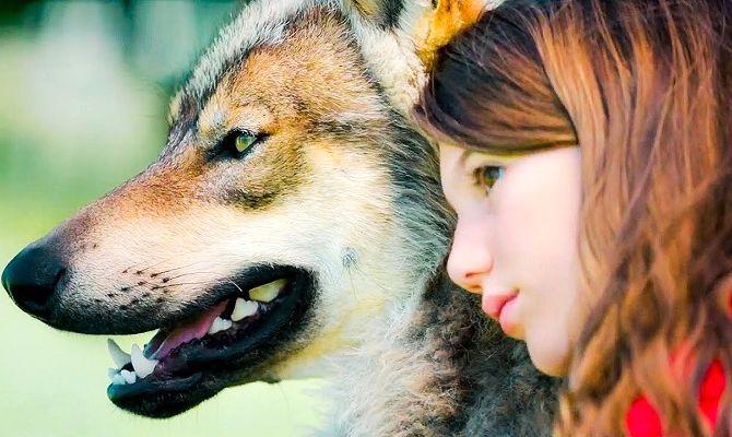 Мой волк, фильм
