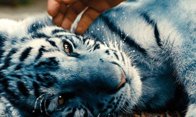 Синий тигр, фильм