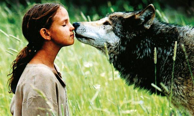 Волчье лето, фильм
