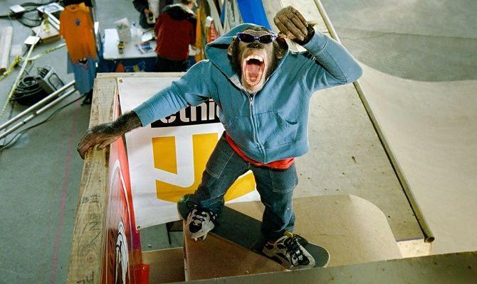 Король скейтборда, фильм